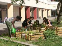 1.-Erntezeit--KTP-Garten-2013-1