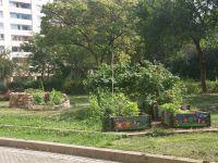 KTP-Schnecke--Garten-10-5